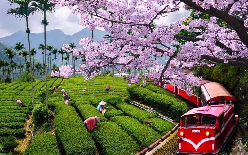 Ngồi trên xe lửa Alishan ngắm nhìn phong cảnh bao quanh các ngọn núi cũng mang đến cho du khách nhiều trải nghiệm mới lạ khi du lịch miền Nam Đài Loan